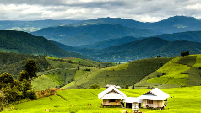 TL: rice terrace cover many mountain range