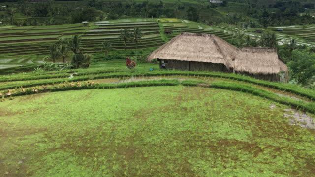 Rice Terrace Fields in Bali, Indonesia