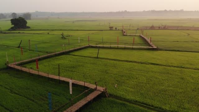 rice terrace fields in northwest of thailand - satoyama scenery stock videos & royalty-free footage