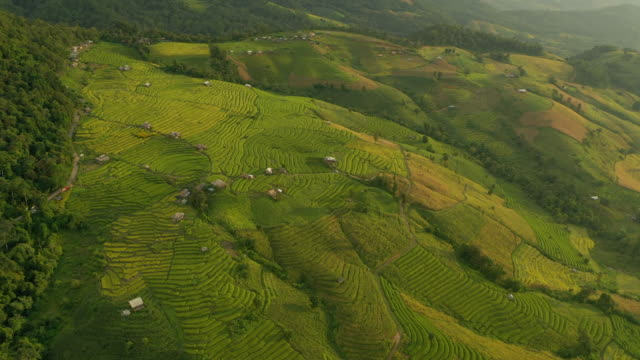 rice terrace in aerial view with dolly shot - harvesting stock videos & royalty-free footage