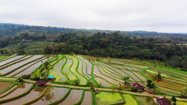 Rice Terrace in Gorgeous Ubud, Bali - Indonesia