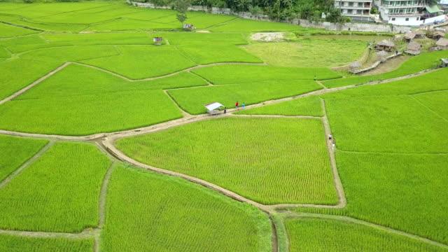 vídeos y material grabado en eventos de stock de rice terrace in pao nan, thailand - paisaje mosaico