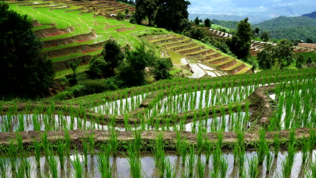 Rice terrace seedlings layer view in the field with water from nature around mountain ,at Ban Pa Bong Piang Hill tribe village, Chiangmai, Thailand : PR