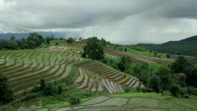 rice terrace - rice plant stock videos and b-roll footage