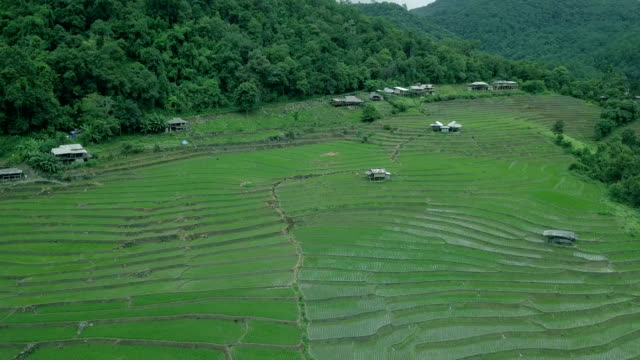 rice terrace - manila philippines stock videos and b-roll footage