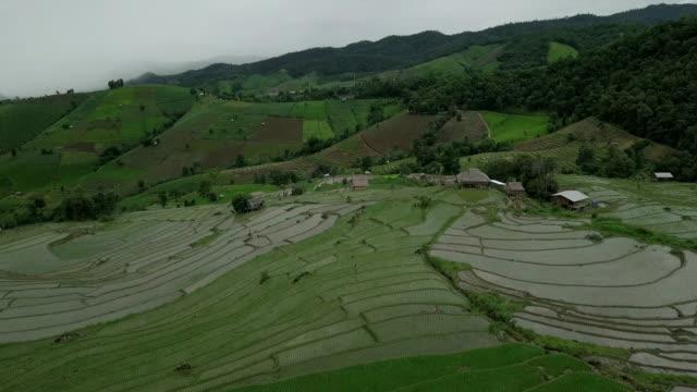 vídeos y material grabado en eventos de stock de arroz terraza  - rice paddy