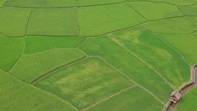 Rice Terraces Aerial Shot at Nan, north of Thailand