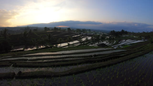 rice terraces / bali, indonesia - ökotourismus stock-videos und b-roll-filmmaterial