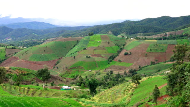ZI/Rice terraces in northern Thailand.