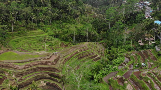 rice terraces near tegallalang village - ubud district stock videos & royalty-free footage