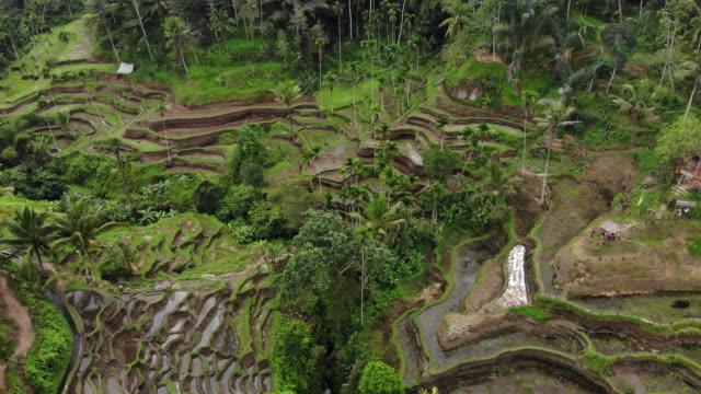 Rizières en terrasses près du village de Tegallalang