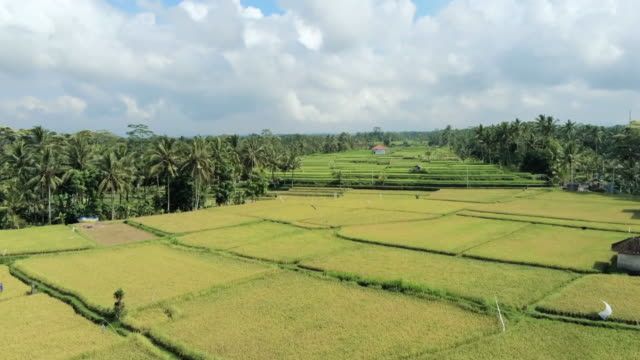 aerial ws rice terraces, ubud, bali, indonesia - ubud stock videos & royalty-free footage