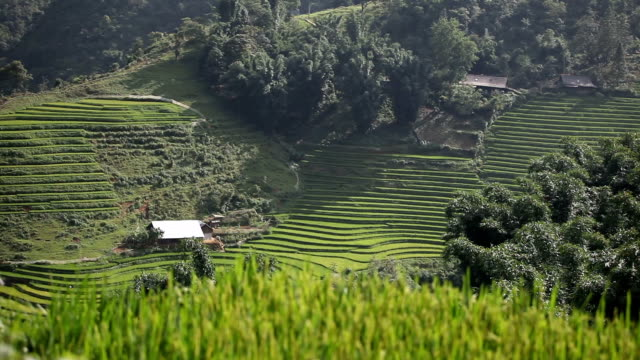 ricefields landscape in sa pa, vietnam - sa pa stock videos and b-roll footage