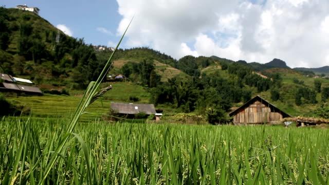 die landschaft noch in ricefields, vietnam - sa pa stock-videos und b-roll-filmmaterial