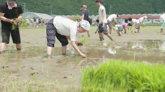 rice-planting in japan - paddy field stock videos and b-roll footage