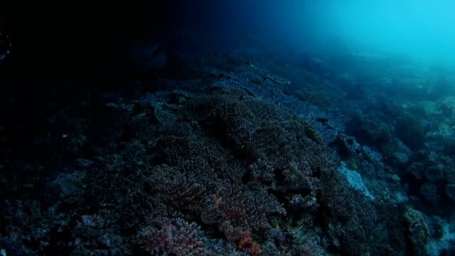 vídeos de stock, filmes e b-roll de rich recife de corais abaixo da superfície do mar em raja ampat, indonésia - boa postura
