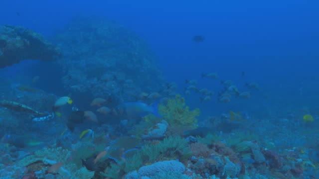 rich coral reef komodo, indonesien - meerbarbe stock-videos und b-roll-filmmaterial
