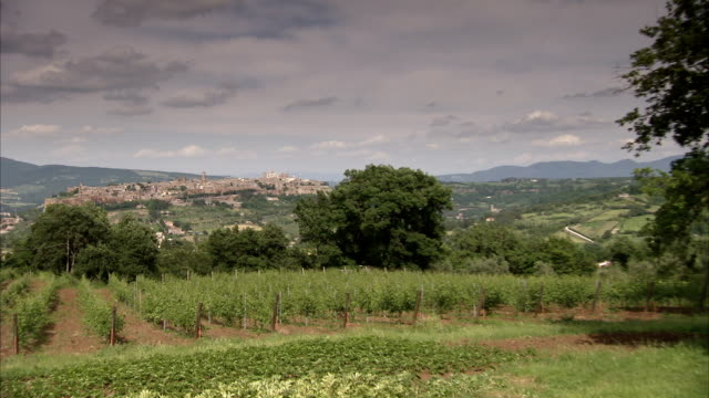 a rich vineyard grows on the outskirts of the renaissance hill town of montepulciano. available in hd. - tuscany stock videos & royalty-free footage