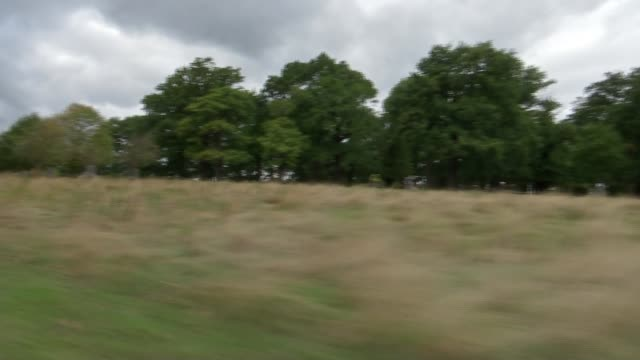 Richmond Park rangers warn against approaching stags during rutting season ENGLAND London Richmond Richmond Park EXT Car driven along in park View of...