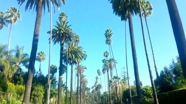 ride in beverly drive in los angeles - palm tree stock videos & royalty-free footage