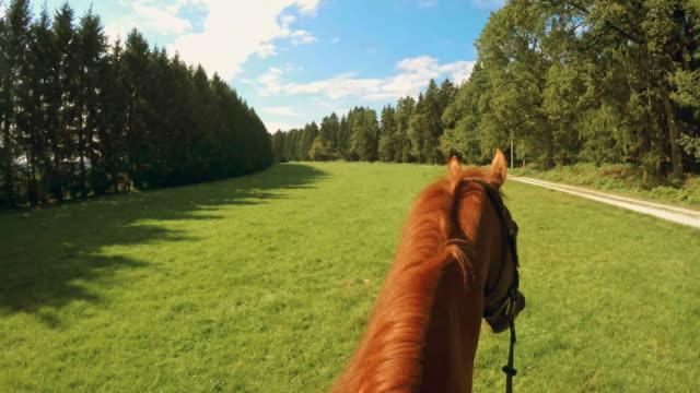 POV rit op een lopende bruin paard over de weide