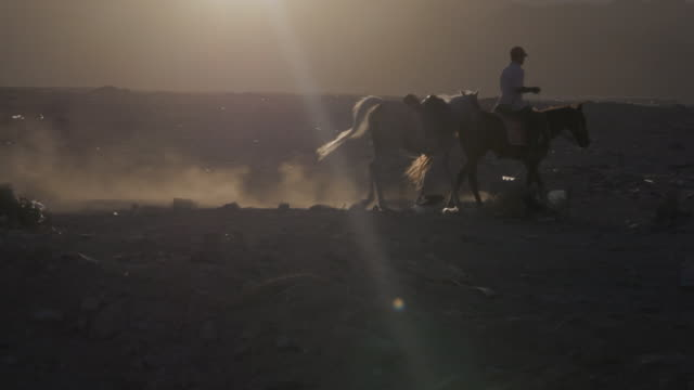 f/s rider and horses walking in sinai desert near dahab - all horse riding stock videos & royalty-free footage
