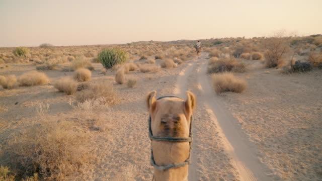 pov of rider on camel - camel stock videos & royalty-free footage