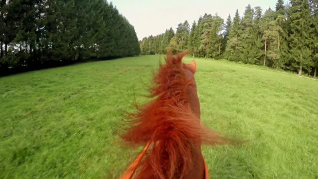 vídeos de stock e filmes b-roll de perspetiva pessoal ciclista andar um cavalo de corrida em prado - cavalgar