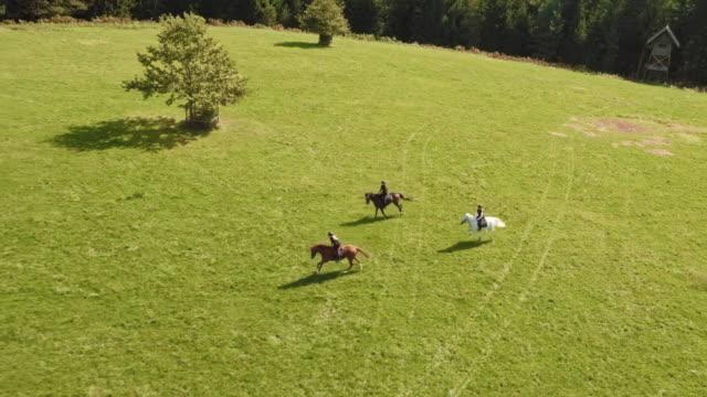 vídeos de stock e filmes b-roll de aerial riders on horses galloping across meadow - cavalgar