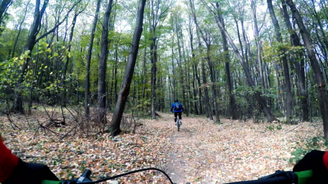 riding a fast single trail in the forest - woodland stock videos & royalty-free footage