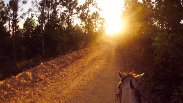 reiten bei sonnenuntergang - pferderitt stock-videos und b-roll-filmmaterial
