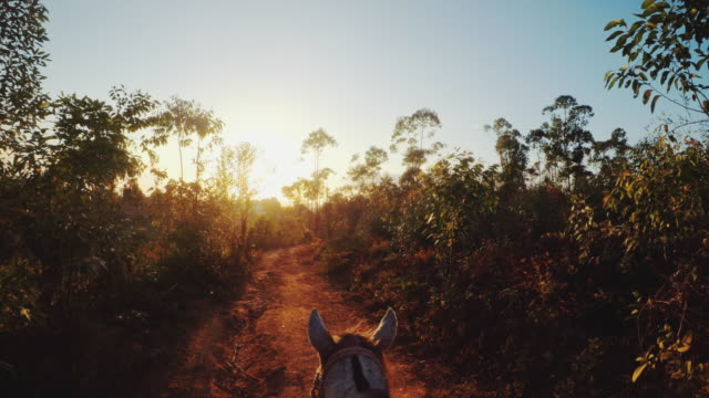 riding a horse at sunset - recreational horseback riding stock videos and b-roll footage