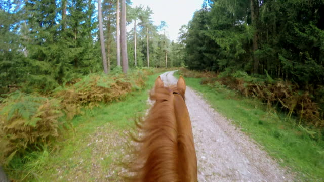 pov riding a running horse on forest path - horseback riding stock videos & royalty-free footage