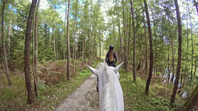pov riding a white horse through nice forest - horseback riding stock videos & royalty-free footage