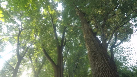 riding bicycle in sunny forest - deciduous tree stock videos & royalty-free footage