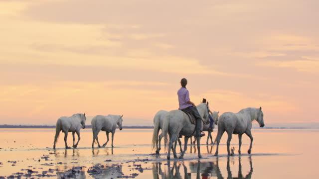 vidéos et rushes de chevaux de camargue d'équitation de ws le long de la plage - beauté de la nature