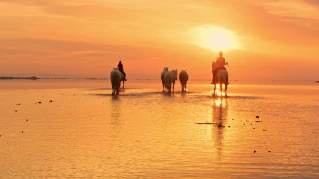 ws reiten camargue pferde bei sonnenuntergang - camargue stock-videos und b-roll-filmmaterial