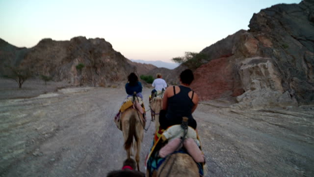 riding camels in the dessert - camel stock videos & royalty-free footage