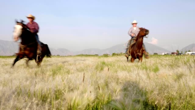 riding fast horses - appaloosa stock videos and b-roll footage