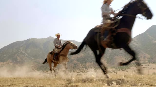 riding fast horses - recreational horseback riding stock videos & royalty-free footage