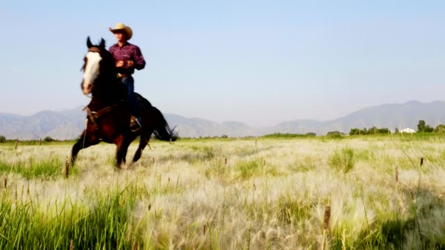 riding fast horses - all horse riding stock videos & royalty-free footage