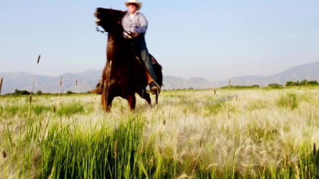 vídeos de stock, filmes e b-roll de andar a cavalo rápido - montar um animal