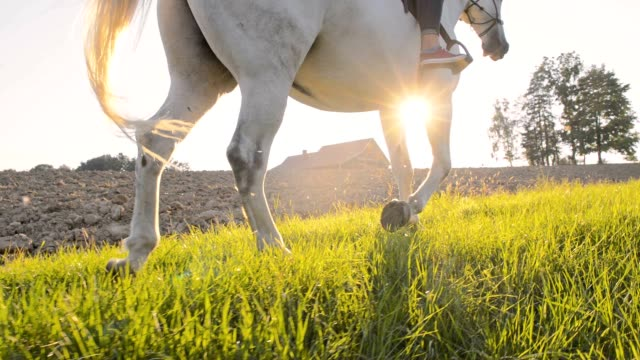 slo mo riding horse along a cultivated field - horseback riding stock videos & royalty-free footage