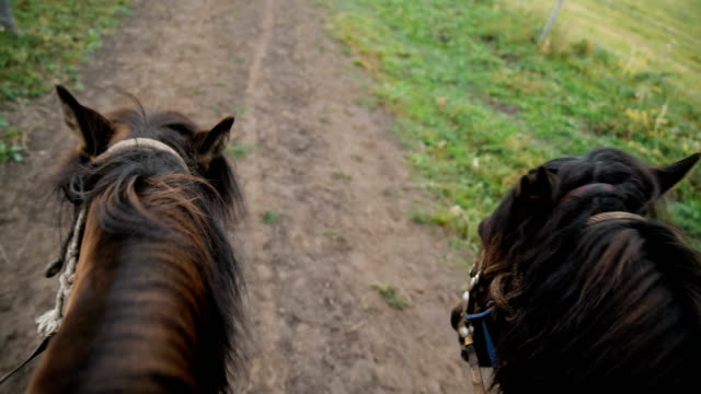 riding horses in vacation - direction stock videos & royalty-free footage