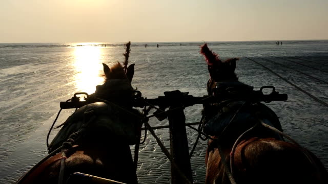 riding horses on a beach - horse stock videos & royalty-free footage