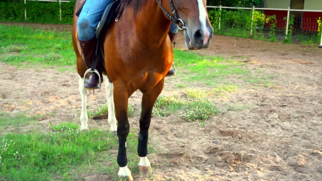 Paardrijden paarden (Slow Motion)