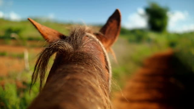riding on horse point of view - recreational horse riding stock videos and b-roll footage