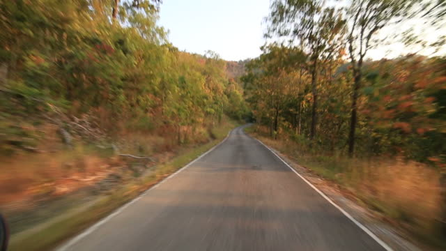 Riding on Road in forest