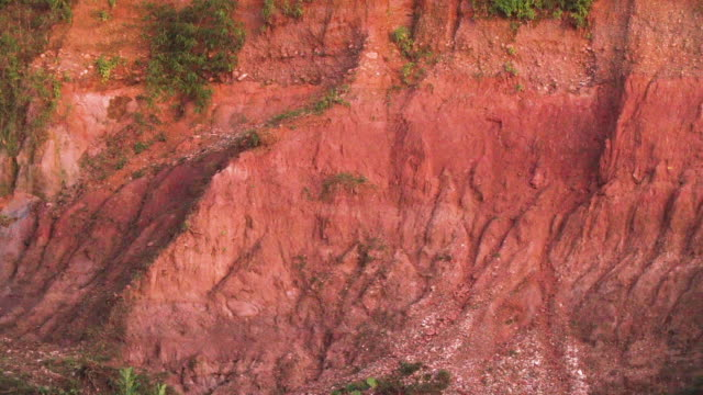 vídeos de stock, filmes e b-roll de right pan of clay lick in the peruvian rainforest - tambopata