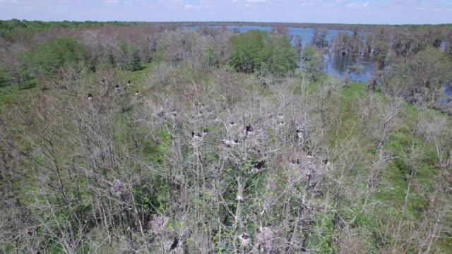 Right to left half orbit of birds in nest - Drone Aerial 4K Everglades, Swamp bayou with wildlife alligator nesting Ibis, Anhinga, Cormorant, Snowy Egret, Spoonbill, Blue Heron, eagle, hawk, cypress tree 4K Nature/Wildlife/Weather Drone Aerial Video